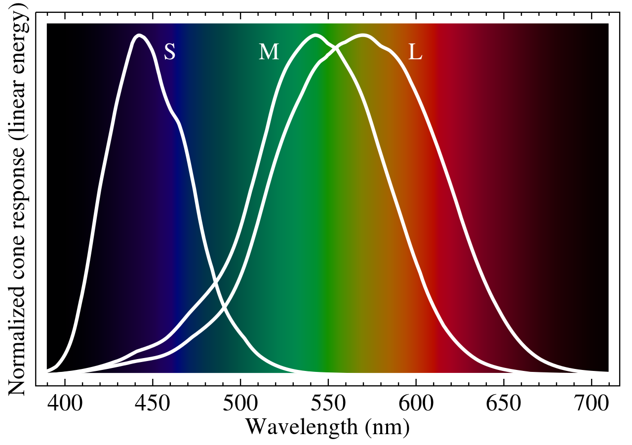 Response of each cone cell type to different wavelengths of light. Picture from Wikipedia: https://upload.wikimedia.org/wikipedia/commons/thumb/0/04/Cone-fundamentals-with-srgb-spectrum.svg/1280px-Cone-fundamentals-with-srgb-spectrum.svg.png